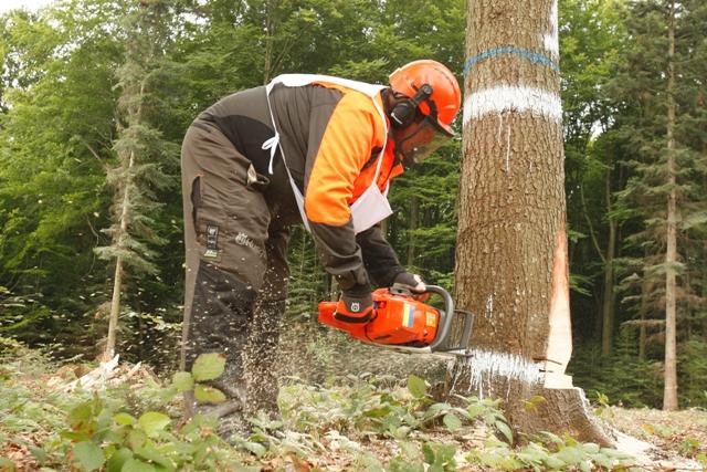 """На території ДП """"Буське лісове господарство"""" відбудуться XXI обласні  змагання вальників лісу"""